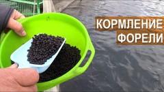 Coppens Intensiv корм для осётра 25кг, гранулы 9мм