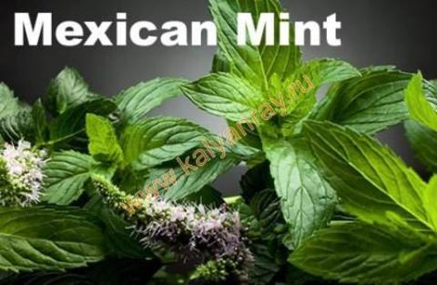 Argelini Mexican Mint