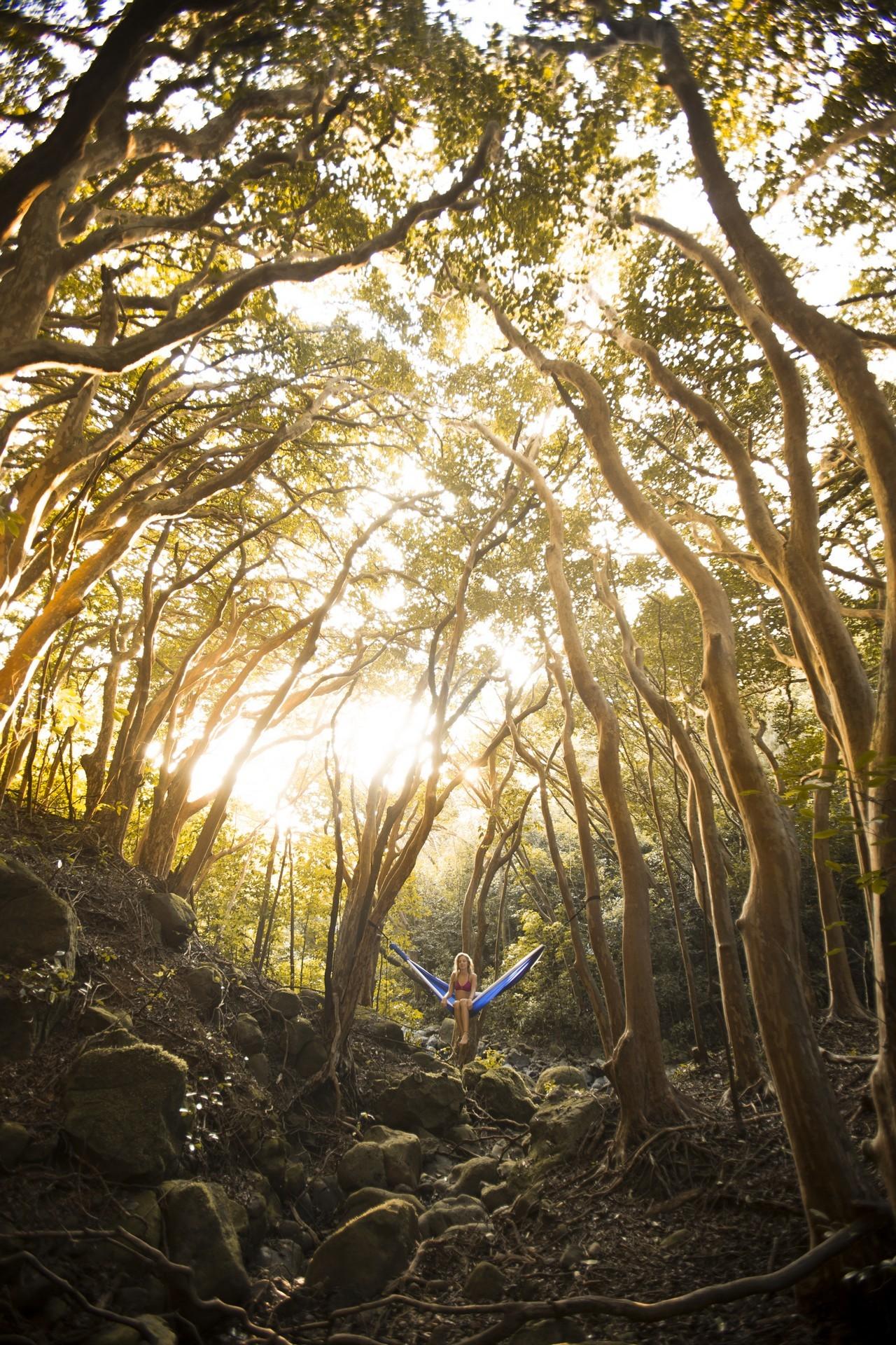 Гамак висит в лесу.