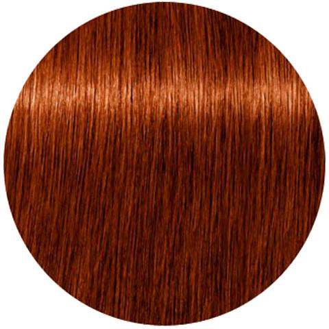 Schwarzkopf Igora Absolutes New 6-70 (Темный русый медный натуральный) - Стойкая крем-краска для окрашивания зрелых волос