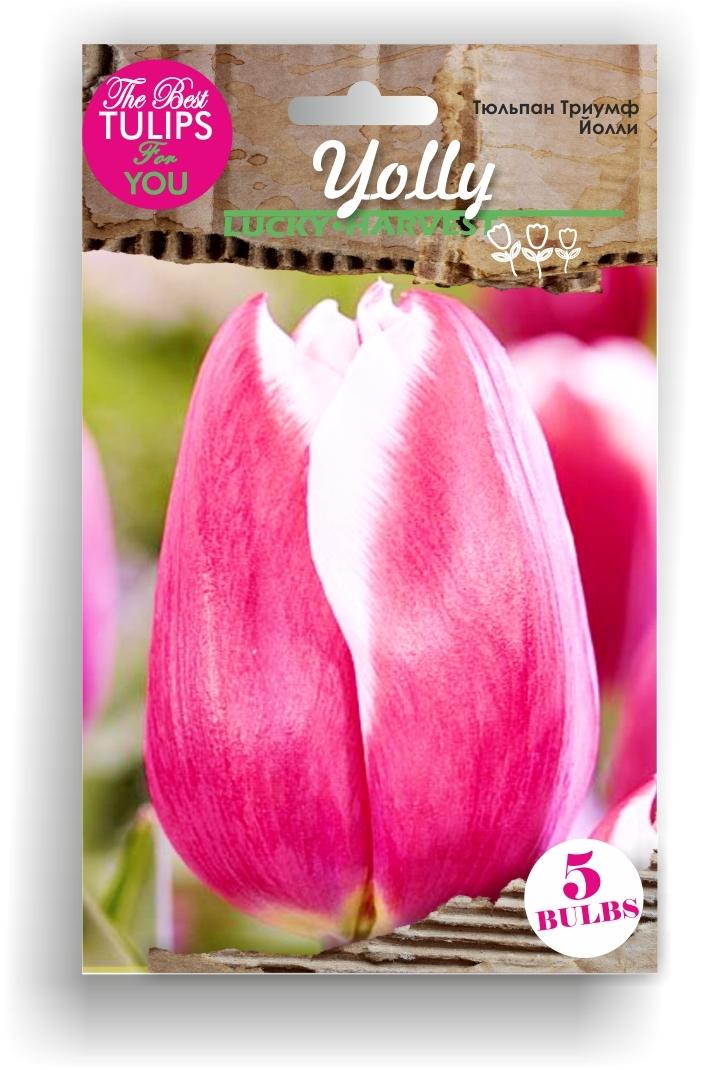 Луковицы Тюльпана Триумф Yolly (Йолли) ТМ LUCKY HARVEST (количество в упаковке 3 луковицы)