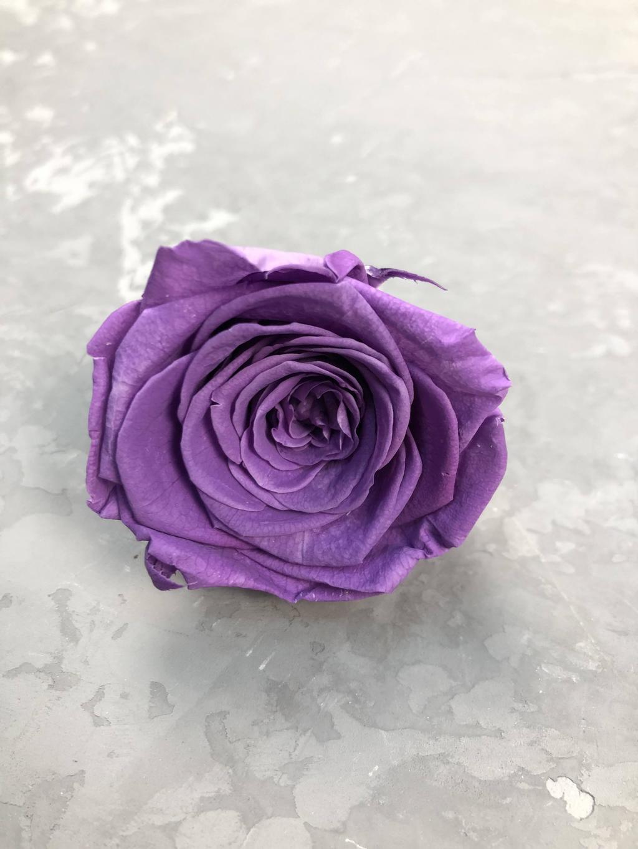 Роза классическая сиреневая d=5,5 см