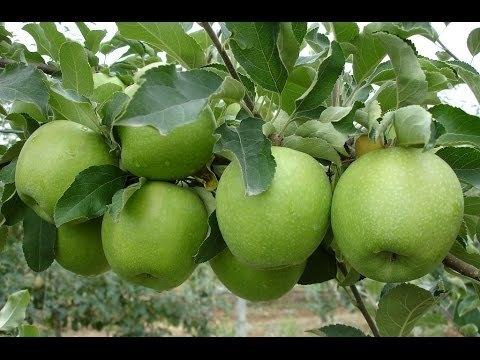 Яблоко Гренни Смит 1кг