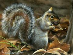 Картина раскраска по номерам 40x50 Белка с орехом