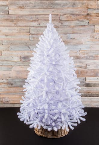 Triumph Tree Ель Исландская белоснежная 1.85 м