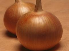 Бонус F1 семена лука репчатого (Takii / Таки)