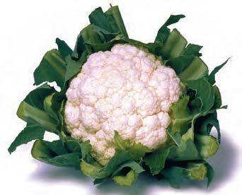 Цветная Кашмир F1 семена капусты цветной (Sakata / Саката) КАШМИР_F1_семена_овощей_оптом.jpg