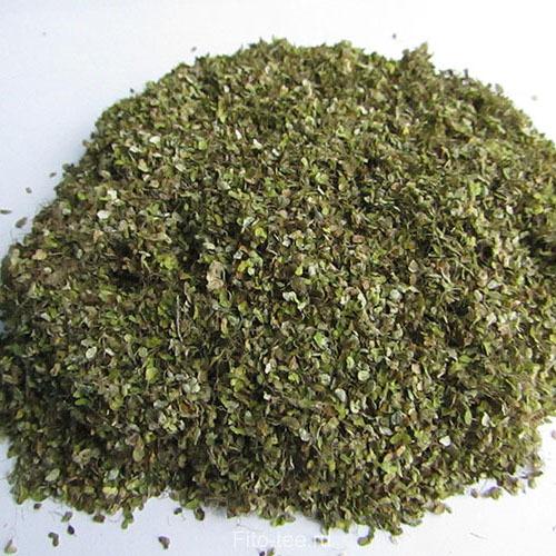 Травы Ряска lemna-522.jpg