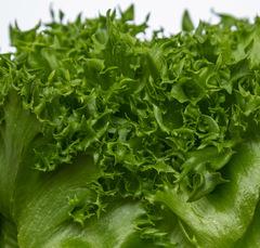 Финстар семена салата листового (Nunhems / Нюнемс)