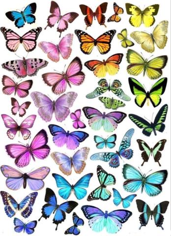 Печать на вафельной бумаге, Набор Бабочки 13