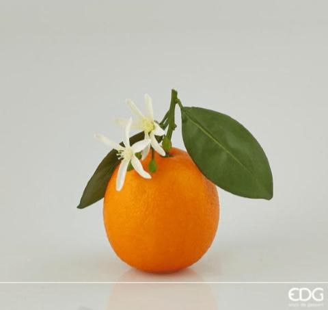 Апельсин декоративный