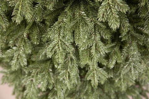 Триумф Ель Царская 155 См Зеленая
