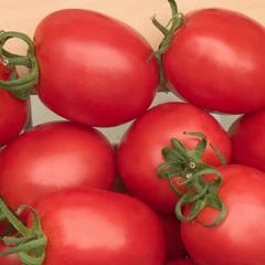 Альбион F1 семена томата индетерминантного (Гавриш)
