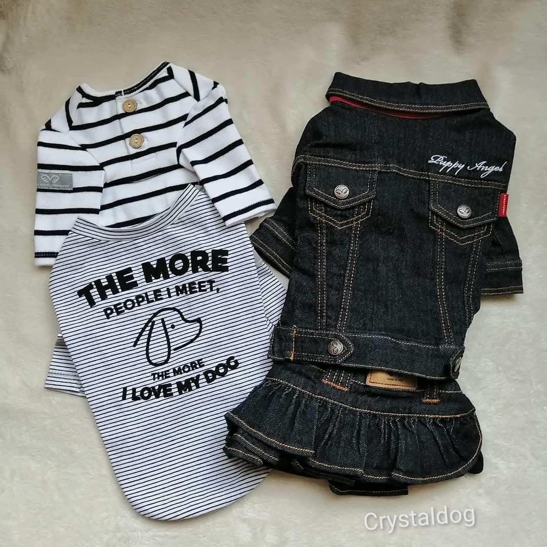 джинсовая одежда для йоркширских терьеров