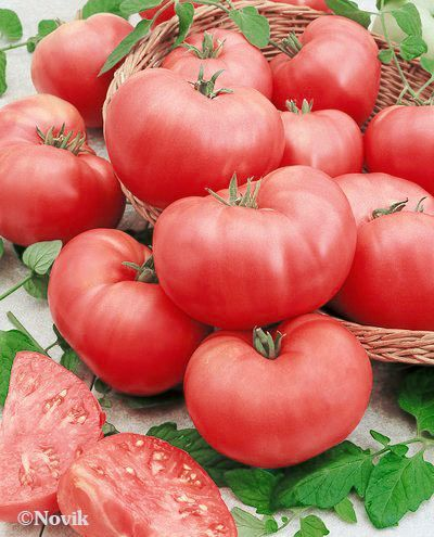 Гавриш Розмакс F1 семена томата индетерминантного (Гавриш) Розмакс_F1.jpeg