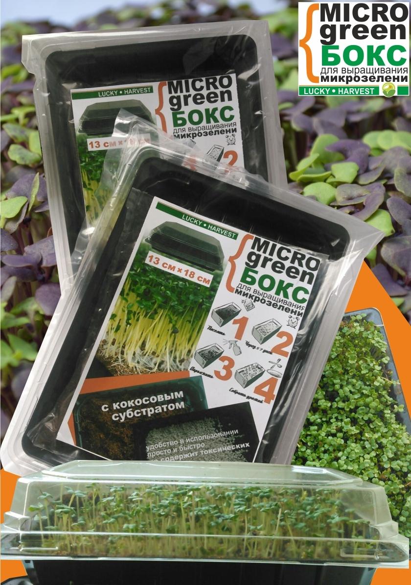 MICROGREEN BOX для выращивания микрозелени (13 см X 18 см) ТМ LUCKY HARVEST