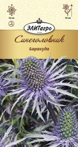 Семена Синеголовник Баракуда, Мнг