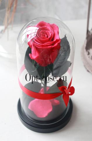 Роза в колбе 850р Micro Оптом Выс*Диам*Бутон (22*11*5см) Цвет Фуксия