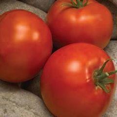 Линда F1 семена томата детерминантного (Sakata / Саката)