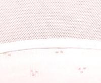 Трусы женские мини бэк  LP-2644 комплект (2шт.)