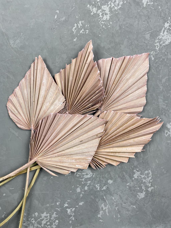 Лист пальмы копьем мини розовый