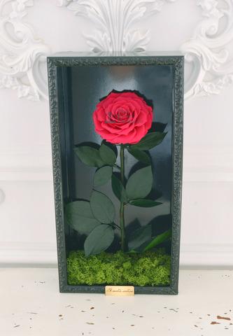Стабилизированная Роза в Картине Premium Оптом Размер*Бутон (44х22х8см*11см) Цвет фуксия