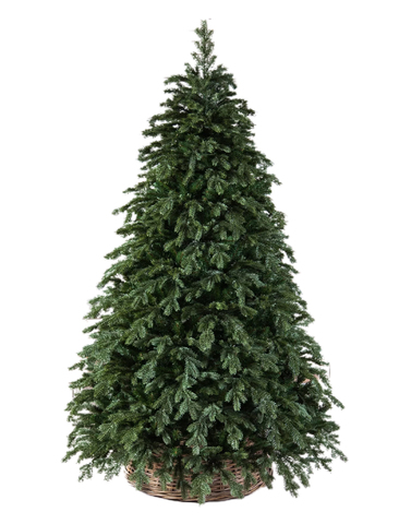 Triumph tree ель Царская РЕ 1,85 м зеленая