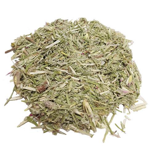 Травы Соссюрея иволистая saussurea-549.jpg