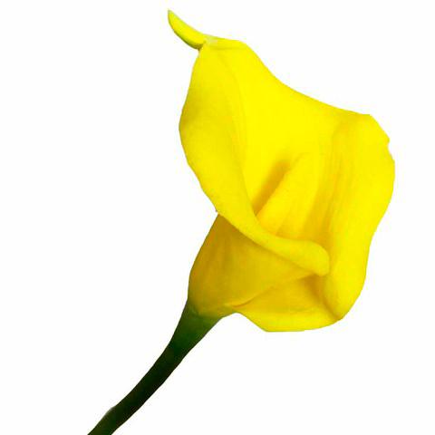 Калла желтая 63 см