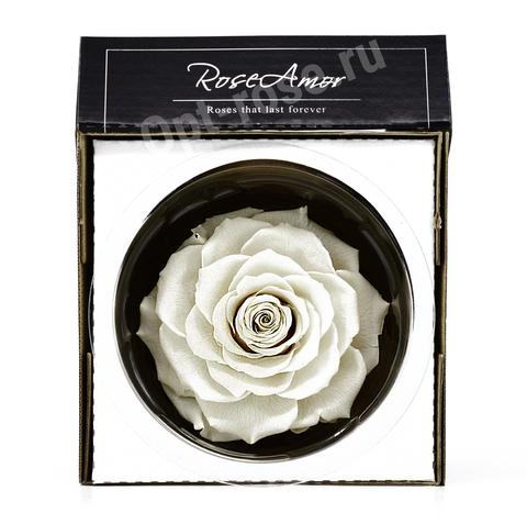 Стабилизированный Бутон Розы Кинг Rose Amor(Эквадор)Bonita Цвет Белый (10-12см)