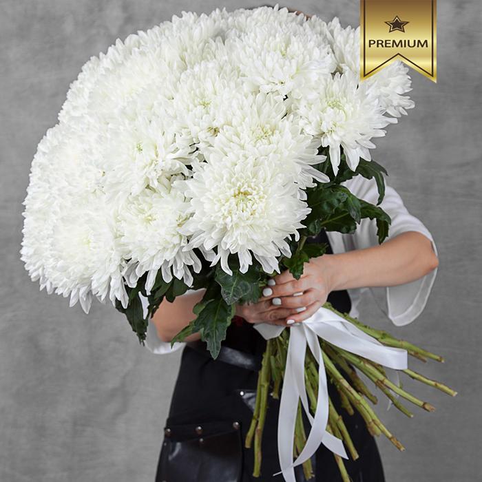 Хризантема шар Антонов белая купить в Перми