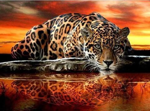Алмазная Мозаика 50x65  Леопард в отражении (арт. TC3367)