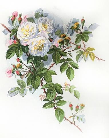 06.002.45 Белые розы по рисунку П. де Лонгпре