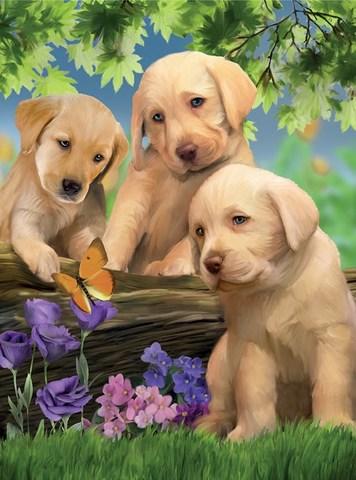 Картина раскраска по номерам 40x50 Три милых щеночка