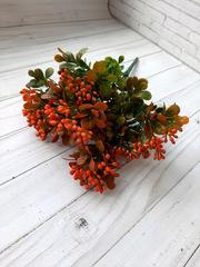 Куст с ягодами Дори малиновый