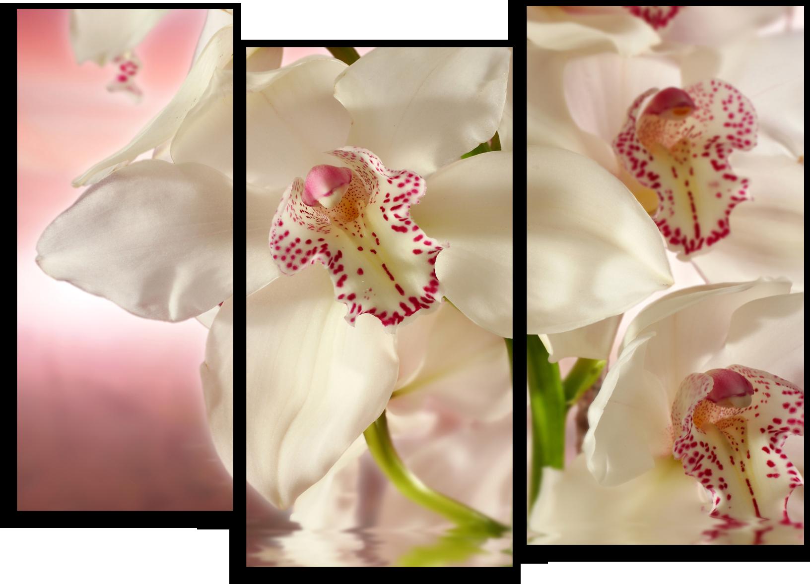 "Цветы Модульная картина ""Цветущая орхидея"" М680.png"