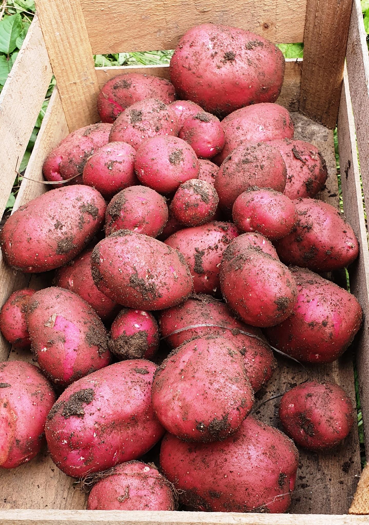 Интернет Магазин Картофеля Почтой