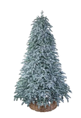 Triumph tree ель Нормандия пушистая РЕ заснеженная 2,15 м