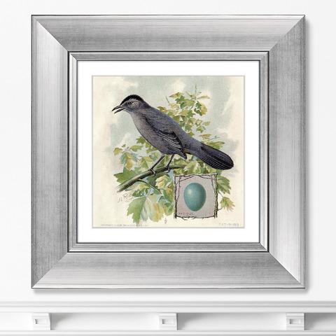 Неизвестен - Птицы, винтажная почтовая открытка №4, 1918г.