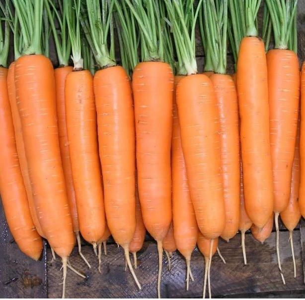 Nunhems Ханиснэкс F1 семена моркови император (Nunhems / Нюнемс) Ханиснэкс.jpg