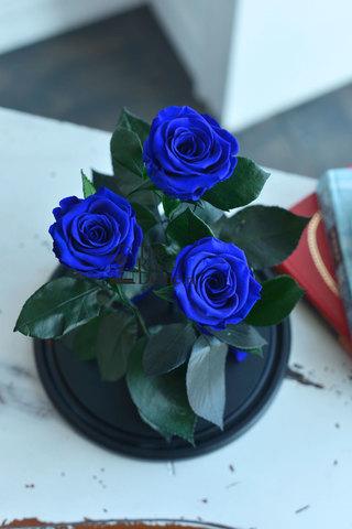 Роза Трио Оптом Выс*Диам*Бутон (32*22*3х7см) Цвет темно-синяя