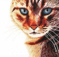 Lanarte Cat Close Up