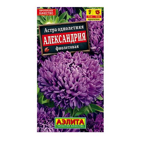 Астра Александрия фиолетовая (Аэлита)