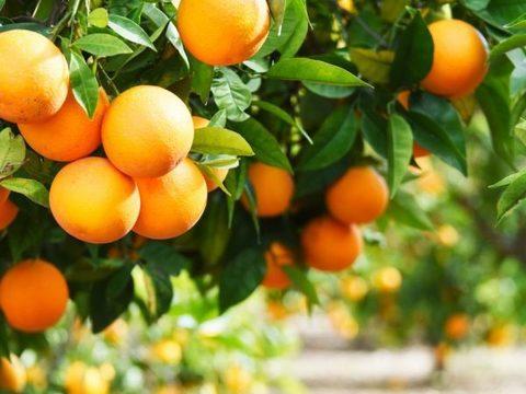Апельсин 1кг