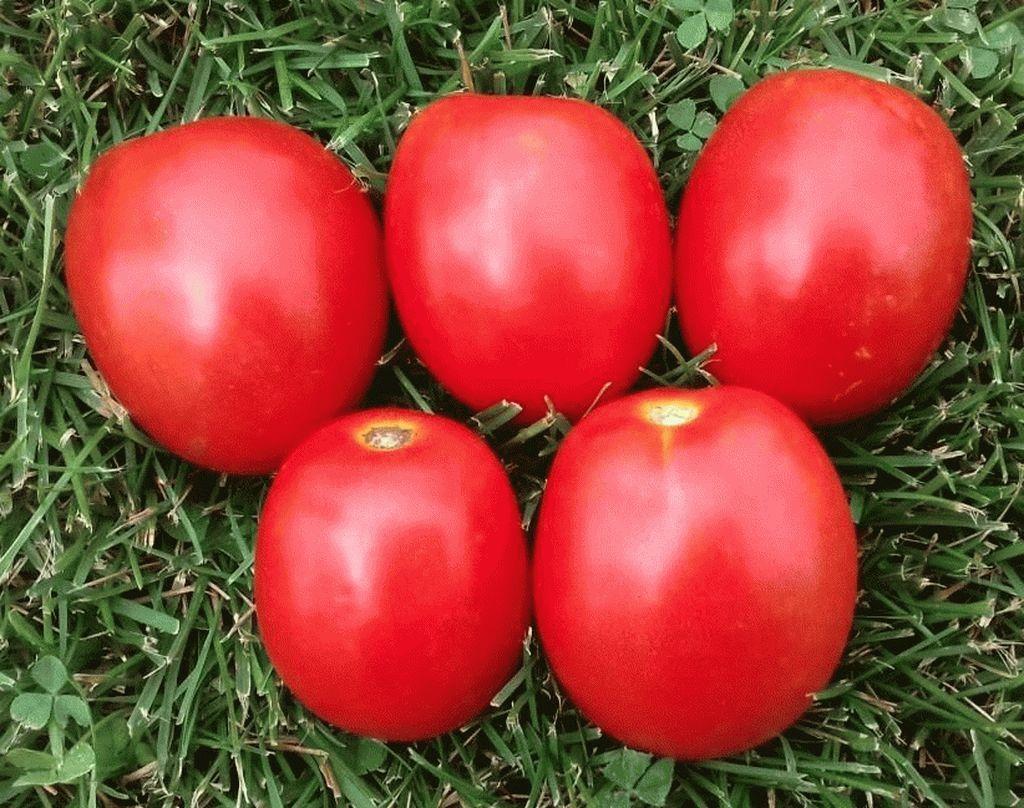 Томат ТМ 10857 F1 семена томата детерминантного (Sakata / Саката) TM_10857_семена_овощей_оптом_семена_овощей_оптом_семена_овощей_оптом.jpg