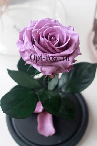 Роза в колбе Premium Оптом(Выс*Диам*Бутон 27*15*7-8см)Цвет сиреневая