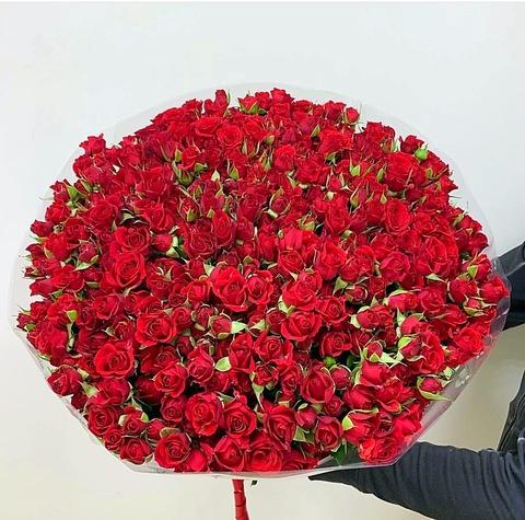 101 кустовая роза #28433