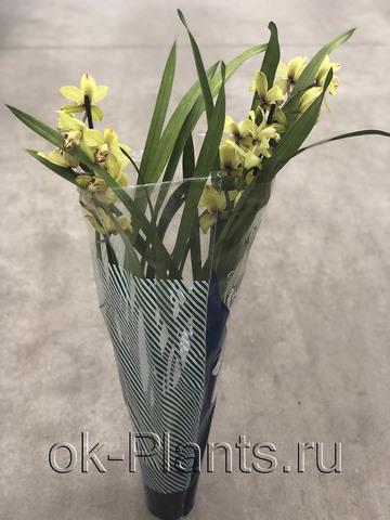Орхидея Цимбидиум Желтая, 2 ветки
