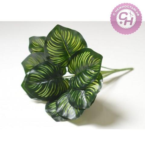 Куст Калатеи полосатой, 9 листьев, 34 см.