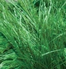 595 (зеленый)
